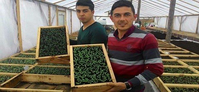 Beypazarı'nda  100 Bin Çiçek Toprakla Buluşacak