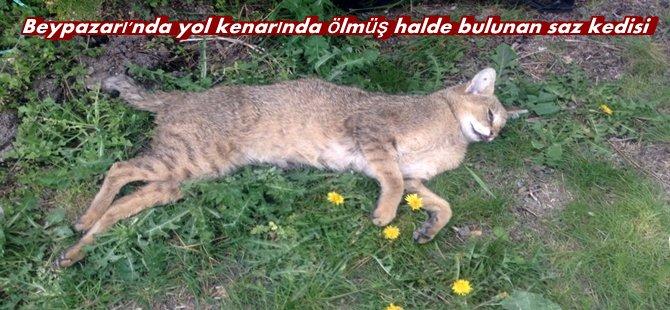 Beypazarı ;  Saz Kedisi Yol Kenarında Ölü Bulundu