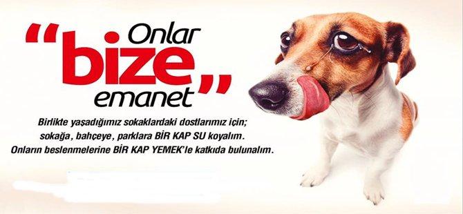 Beypazarı Belediye Başkanlığı Yeni Bir Kampanya Başlattı 'BİR KAP SU'',''BİR KAP YEMEK''