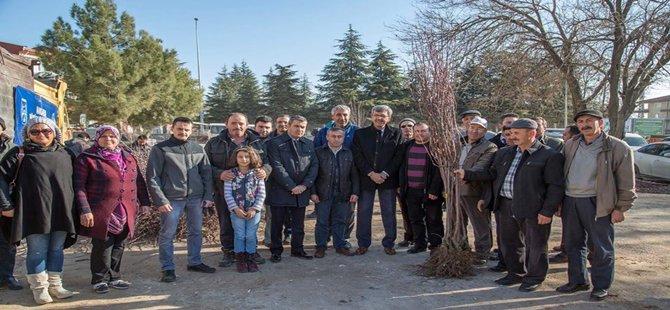 Beypazarı Belediye BaşkanıTuncer KAPLAN 12 bin 500 Meyve Fidanı Dağıttı