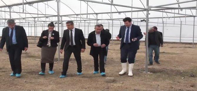 Beypazarı'nda Bazı Seralarda Denetim Yapıldı