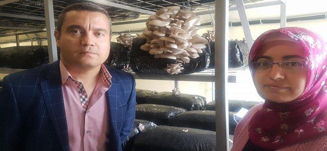 BEYPAZARI'NDA HİBE DESTEĞİYLE SERA KURDU İSTİDYE MANTARI YETİŞTİRİYOR