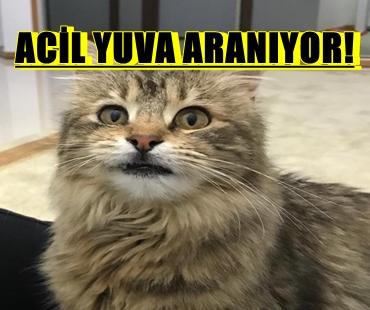 ACİL YUVA ARANIYOR!