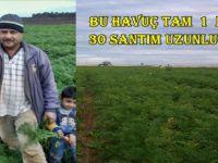 Çiftçi Ahmed İbrahim 1 metre 30 santim Uzunluğunda  Havuç Yetiştirdi
