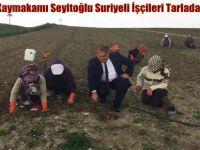 Beypazarı Kaymakamı Seyitoğlu Suriyeli İşçileri Tarlada  Ziyaret Etti