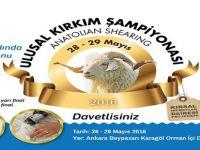 Türkiye'de İlk Defa Kırkım Şampiyonası Beypazarı'nda Düzenlenecek
