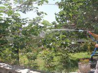 Beypazarı Belediyesi Yeşil Alan Bakım Çalışmalarını Aralıksız Sürdürüyor
