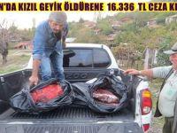 NALLIHAN'DA KIZIL GEYİK ÖLDÜRENE  16.336 TL CEZA KESİLDİ
