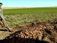 Beypazarı'nda Tarım Çalışmaları