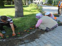 Beypazarı Belediyesinde Çiçek Dikimi Devam Ediyor