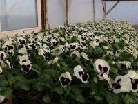 Beypazarı Belediyesi'nden Çevre Belediyelere Çiçek Desteği