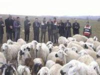 Beypazarı'nda hayvan hırsızlarına karşı uyarı