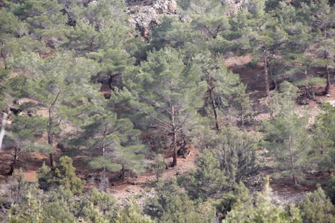 beypazari-nda-kaybolan-3-kisi-ormanda-bulundu-11381049_o.jpg